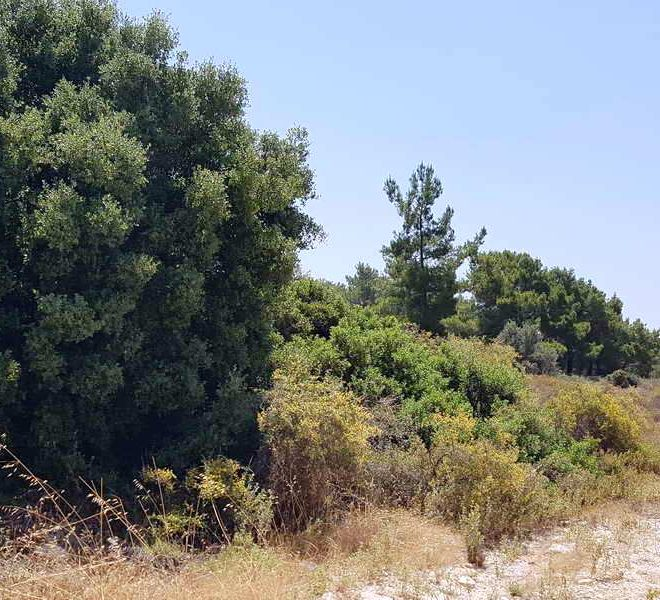 Sea View Residential Land in Limassol, Cyprus, AE12180 image 1