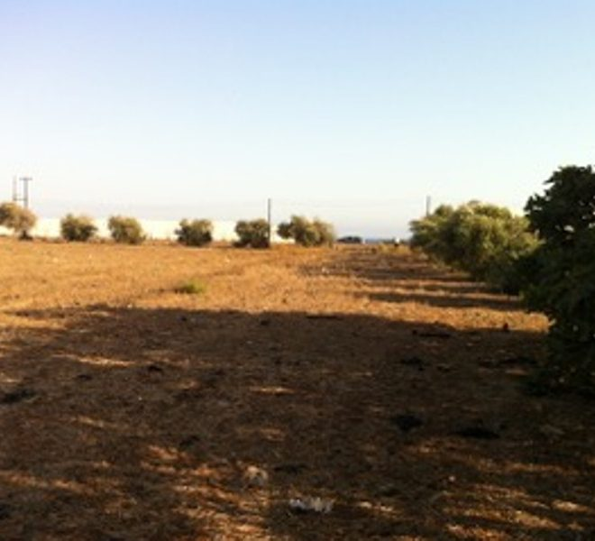 Large Sea Front Land in Maroni, Cyprus, AE12004 image 3